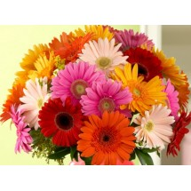 Bouquet de Gerbera orange & Jaune